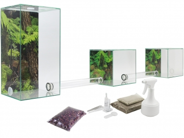ANTCUBE - Starter kit for leaf cutting ants - big